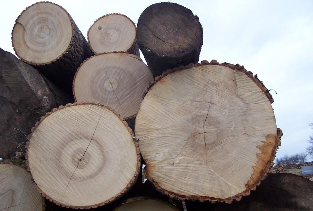 """""""Kurs brakarski drewna okrągłego"""" wrzesień 2020 r. wraz z egzaminem na III klasę brakarską"""